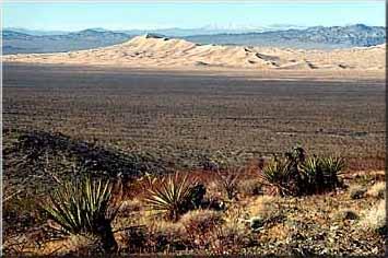 Kelso Dunes 2